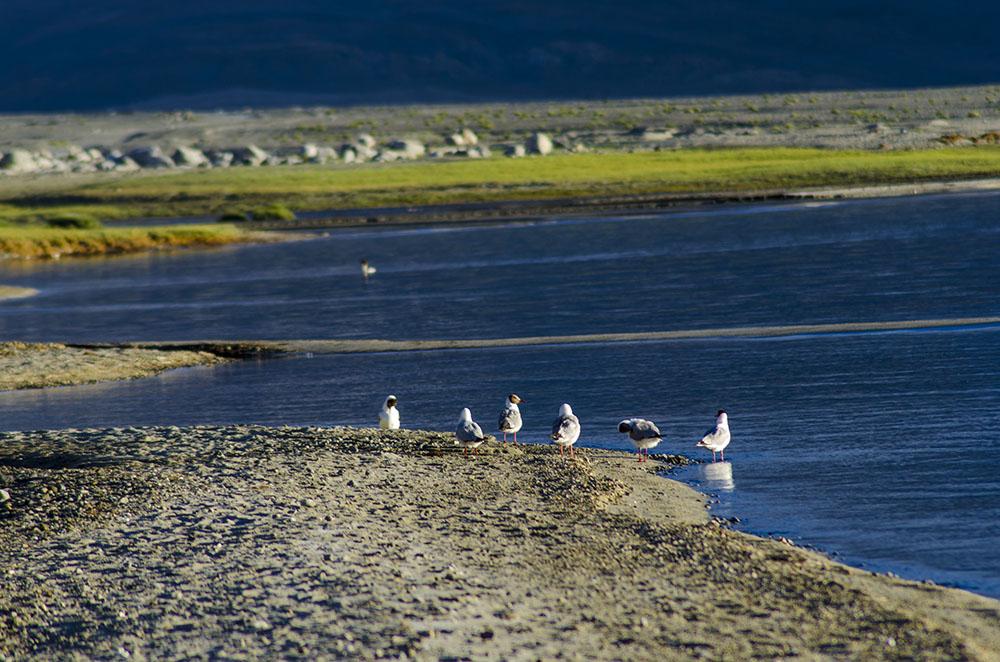 birds flocking near the lake