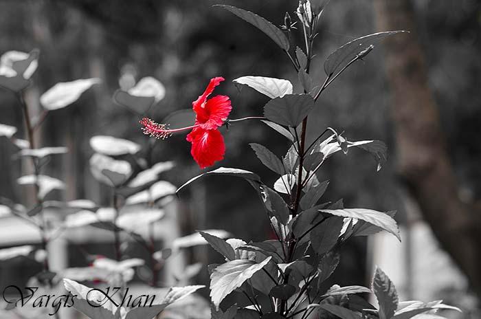 flowers-photography-vargis-khan-2