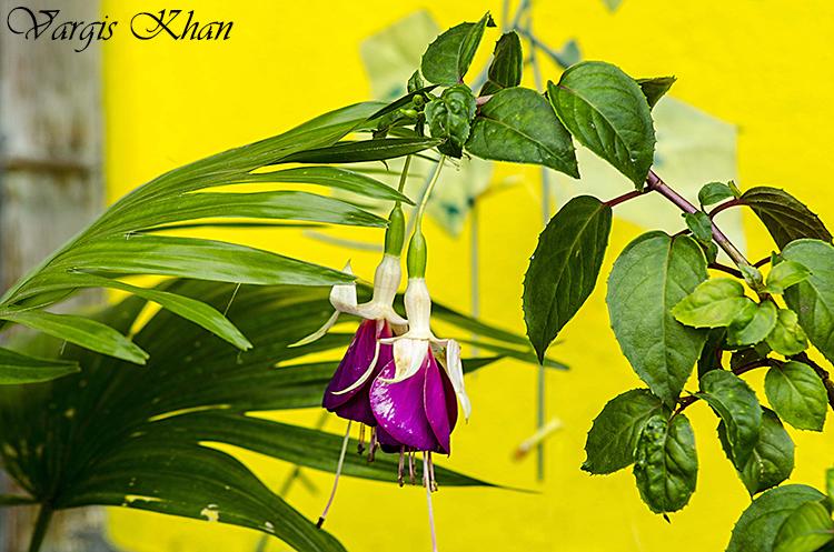 vargis-khan-photography-flowers-2