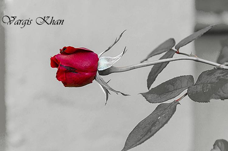 vargis-khan-photography-flowers-6