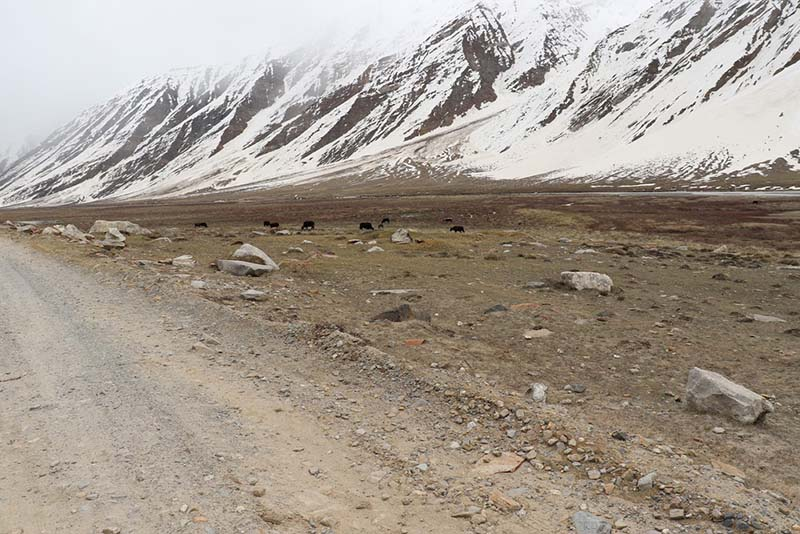 public transport services in zanskar valley