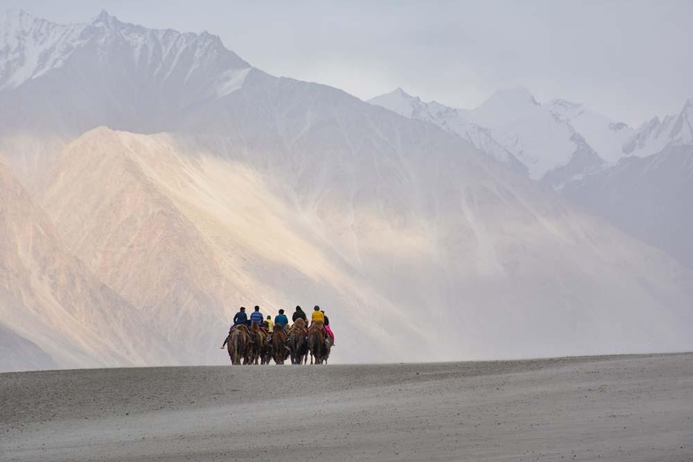camel safari in nubra valley