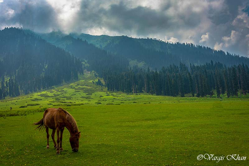 gulmarg to doodhpathri