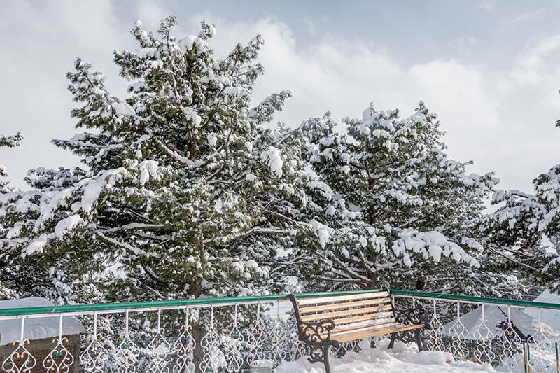 snowfall in auli