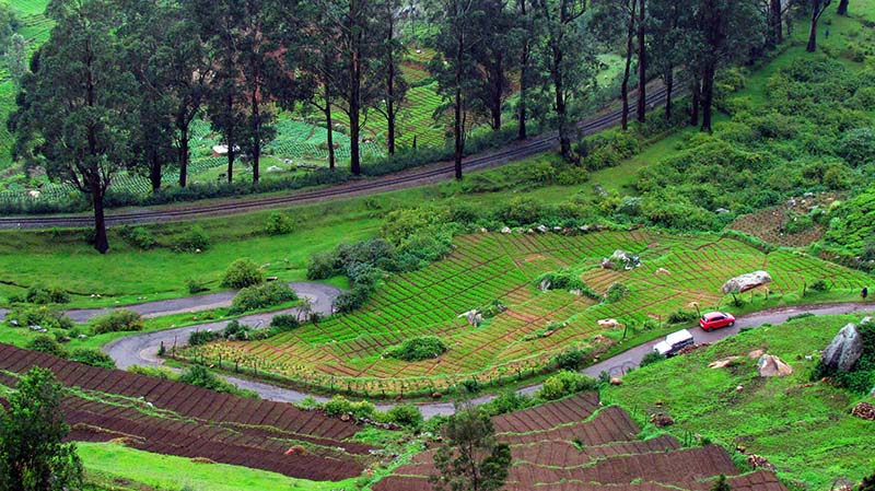 tea plantations in mysore coorg ooty