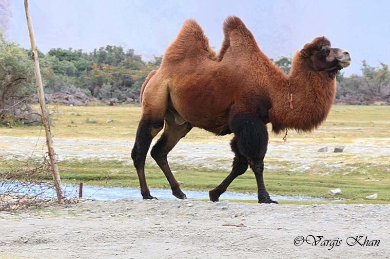 leh ladakh with family