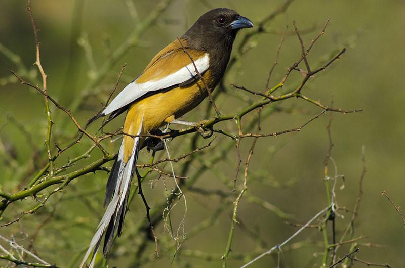 bird watching in chaukori