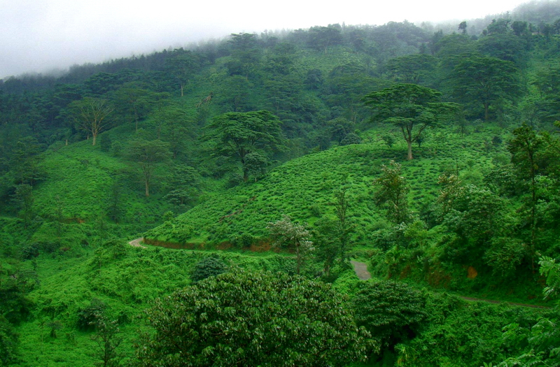 lush green mountains