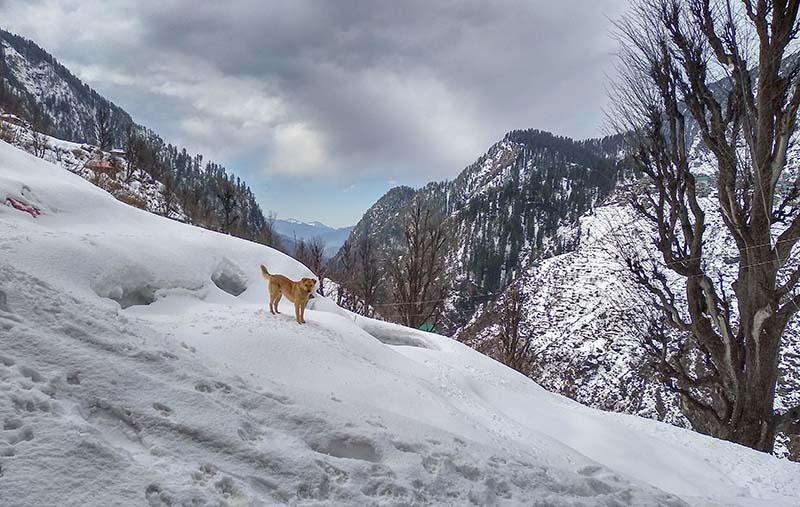 Kinnaur in Winter
