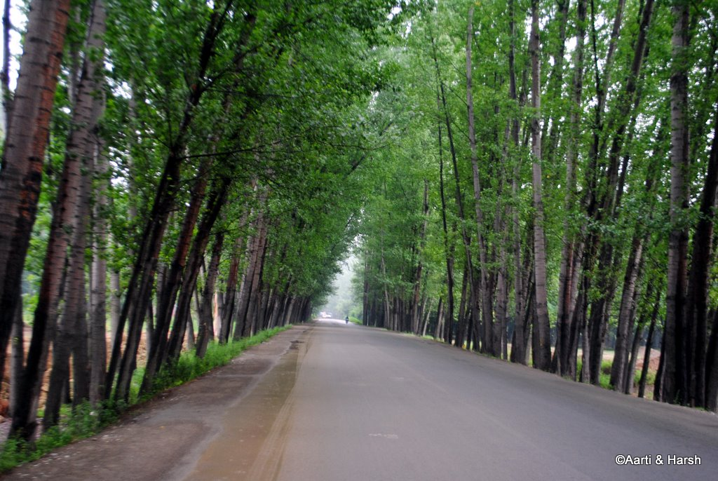 srinagar to delhi by road
