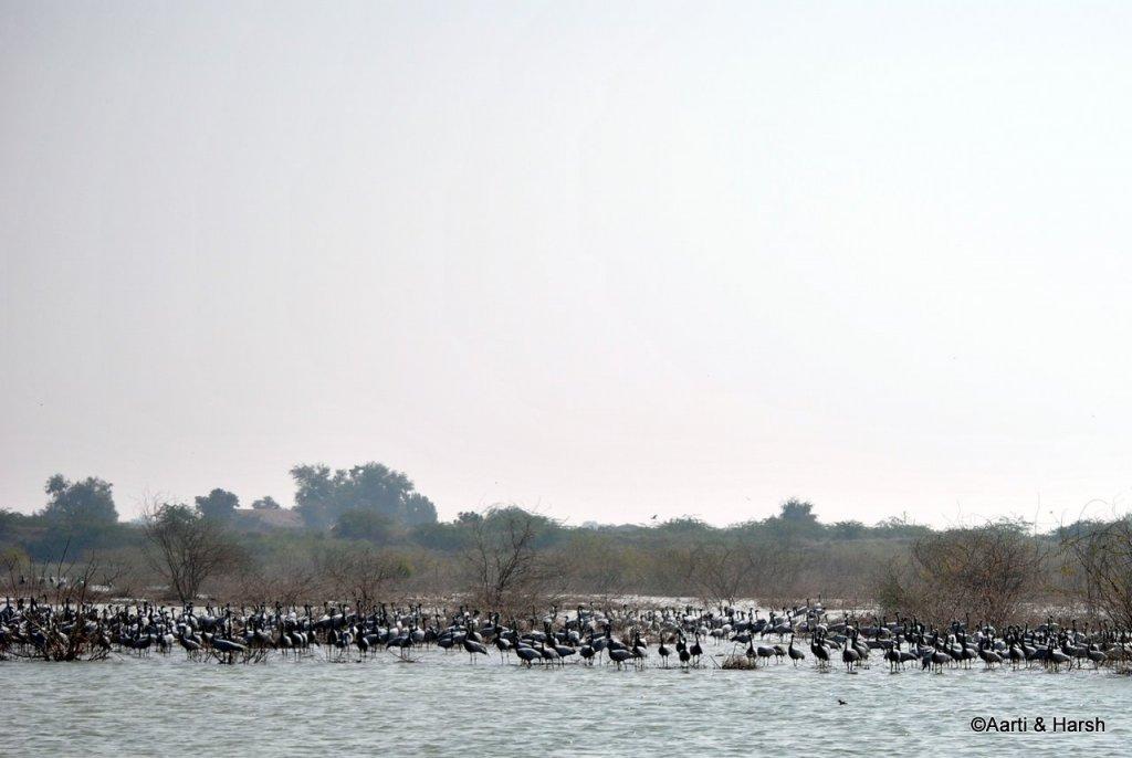 Some birds at a lake en route Dholavira