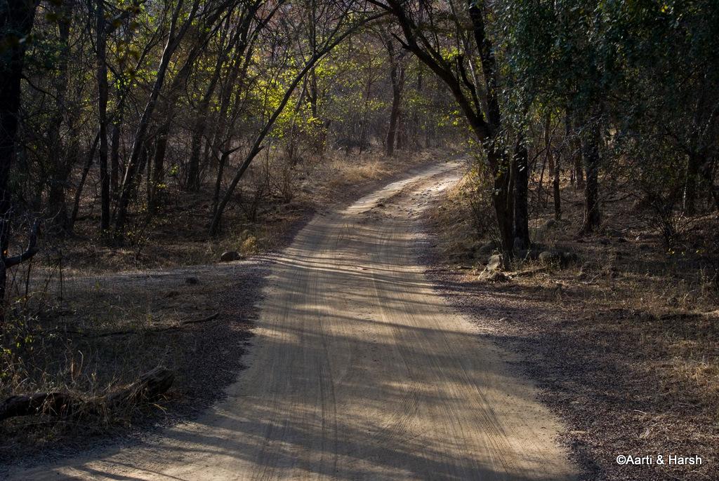 delhi to ranthambore road trip
