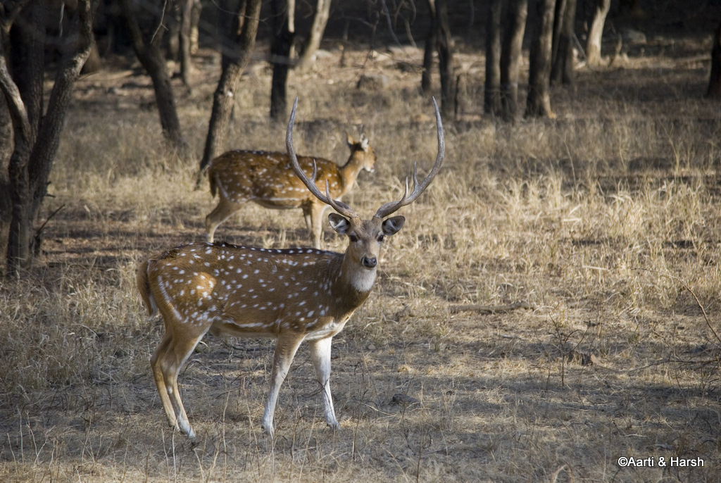 road trip to ranthambore