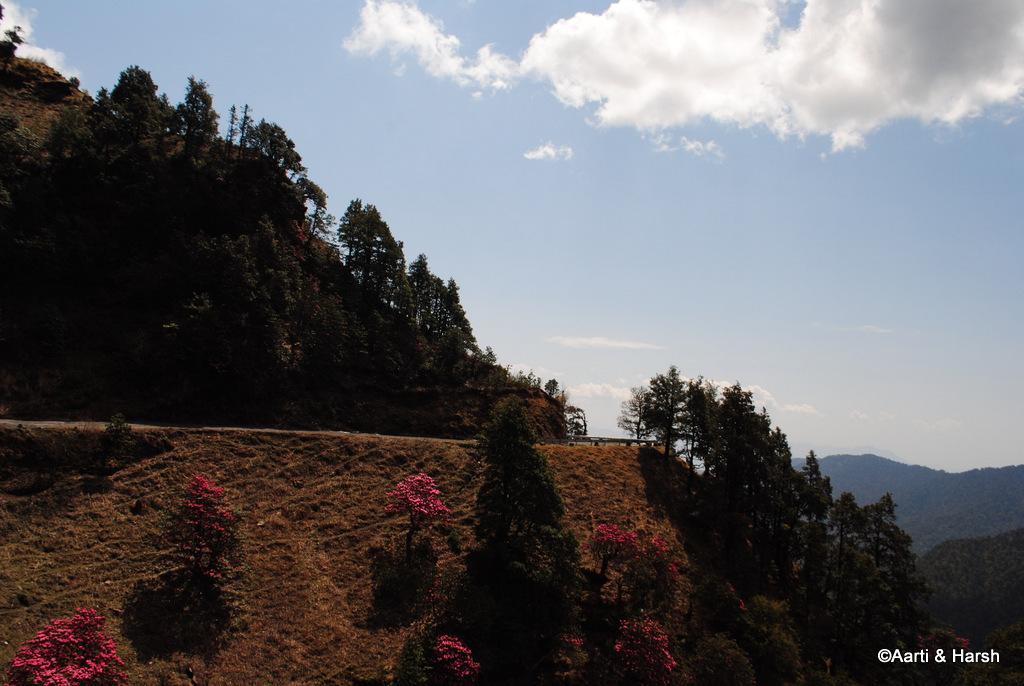 Road Trip to Auli