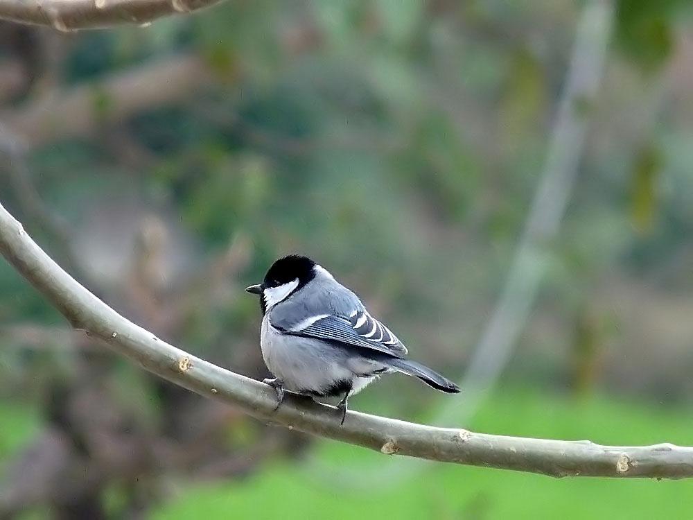 bird watching in syalsaur